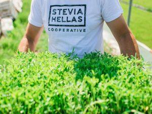 Stevia Hellas Cooperative